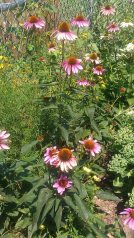 Green Committee Native Plants